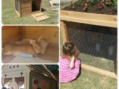 Tour of homes today…. homes with chicken coops and rabbit hutches.